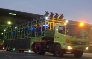 Our Services Motor Carrier 4 3b_our_service_motor_carrier_mt_motor_carrier_services_7_350x250